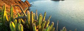 free ocean and cactus nature facebook cover