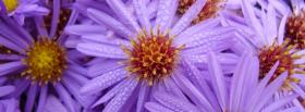 free light purple flowers nature facebook cover