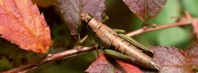 free insect and leaves nature facebook cover