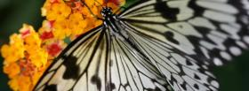 free butterfly nature facebook cover