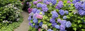 free garden of flowers nature facebook cover
