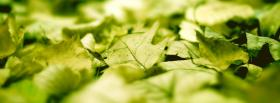 free fallen green leaves nature facebook cover