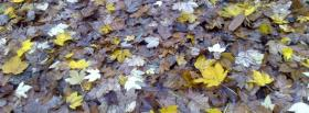 free fallen leaves nature facebook cover