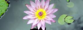 free lotus flower nature facebook cover