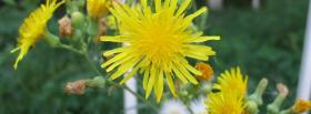 free flowers nature facebook cover