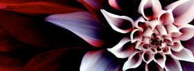 free light dark red flower facebook cover
