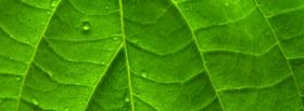 free leaf close up nature facebook cover