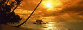 free long palm trees nature facebook cover