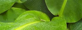 free banana leafs nature facebook cover