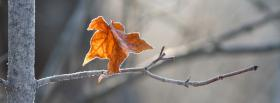 free black and white leaf nature facebook cover