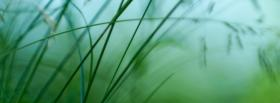 free little grass nature facebook cover