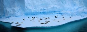free living on ice nature facebook cover