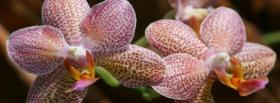 free phalaenopsis orchid nature facebook cover
