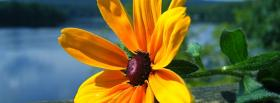 free yellow marvelous flower nature facebook cover