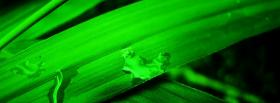 free lime green grass nature facebook cover
