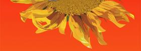 free simple sunflower nature facebook cover