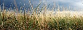 free dried grass nature facebook cover