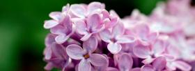 free light purple little flowers facebook cover