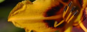free flower close up nature facebook cover