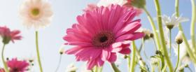 free garden flowers nature facebook cover