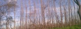 free long tree trunks nature facebook cover