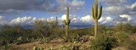 free cactus and sky nature facebook cover