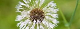 free dandelion flower nature facebook cover