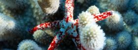 free starfish nature facebook cover