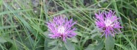 free two flowers nature facebook cover