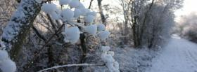 free frozen forest nature facebook cover