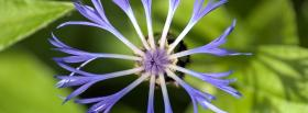free fun blue flower nature facebook cover