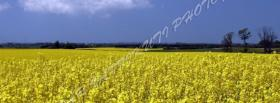 free plain field nature facebook cover