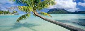 free horizontal palm tree nature facebook cover