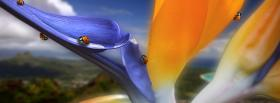 free ladybugs flower nature facebook cover