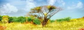 free solitary tree nature facebook cover