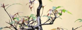 free branch nature facebook cover