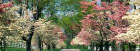 free colorful trees nature facebook cover