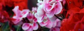 free pink red flowers nature facebook cover