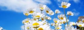 free group of daisies nature facebook cover