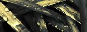 free wet grass nature facebook cover