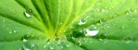 free rain drops green nature facebook cover
