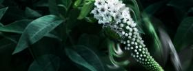 free white cool flower nature facebook cover