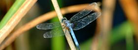 free fly and branch nature facebook cover