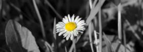 free black and white daisy facebook cover