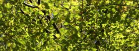 free green leaves nature facebook cover