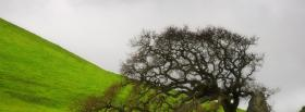 free grass broken tree nature facebook cover