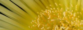 free bright different flower nature facebook cover