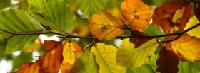 free green orange leaves nature facebook cover