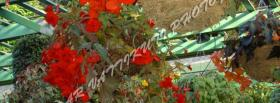 free red little flowers nature facebook cover