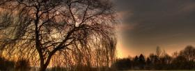 free evening sun tree nature facebook cover